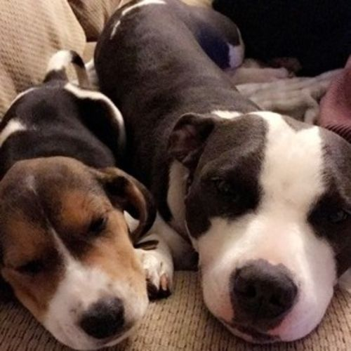 Pet Care Provider Destiney Gamez Gallery Image 2
