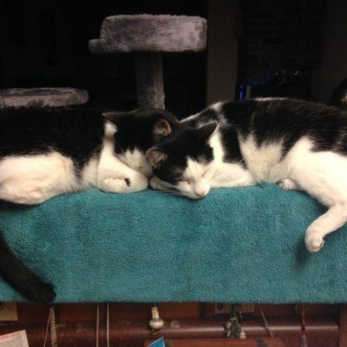 Cat Sitter needed in October!