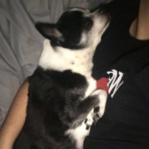 Pet Care Provider Leslie Escudero Gallery Image 1