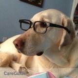 Dog Walker, Pet Sitter in Bedford