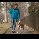Dog Walking and Pet Sitting Offered in Englewood, and Littleton