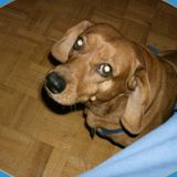 Playful Dog Sitter/Walker in North York, Ontario (Have took care of 5 variety of pets since the age of 5)