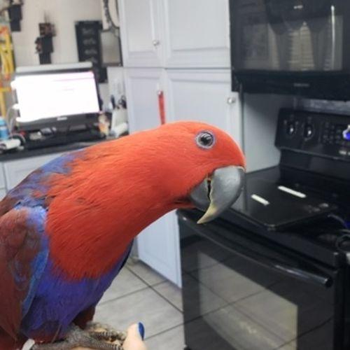 Pet Care Job Mikal M's Profile Picture