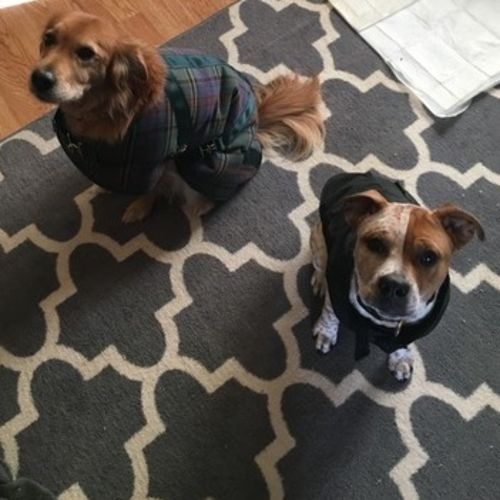 Pet Care Provider Sara Hennecke Gallery Image 2