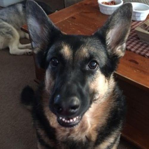 Pet Care Job Lisa Guertin's Profile Picture