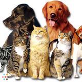Dog Walker, Pet Sitter, Kennel in Arnold