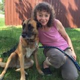 Excellent, Affordable Dog Walking and Pet Sitting Services