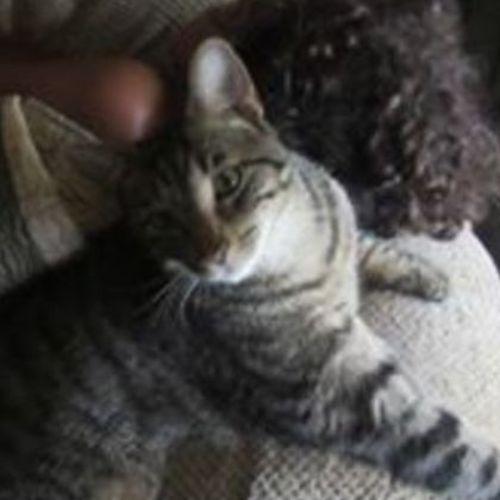 Pet Care Provider Kristi S Gallery Image 2