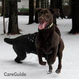 Dog Walker, Pet Sitter in Creemore