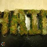 Freelance Topiary Artist