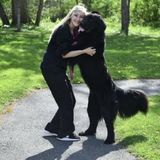Interviewing For Lancaster Dog Walker and Pet Sitter Opportunity