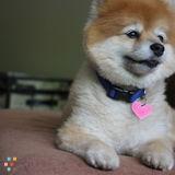 Dog Walker, Pet Sitter in Los Angeles