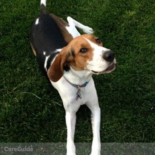 Pet Care Job Tamara Gerchufsky's Profile Picture