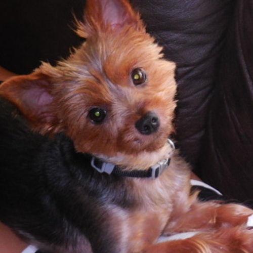 Pet Care Provider Deborah T's Profile Picture