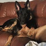 Dog Walker Job, Pet Sitter Job in Lemoore Naval Ai