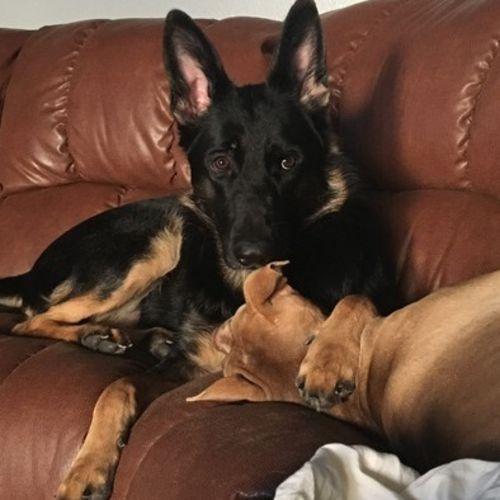 Pet Care Job Talia Caperetta's Profile Picture