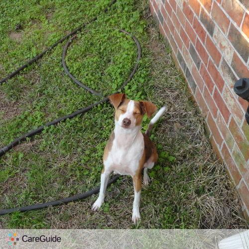 Pet Care Provider Joshua Matherne's Profile Picture