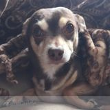 Dog Walker, Pet Sitter in Saint Paul