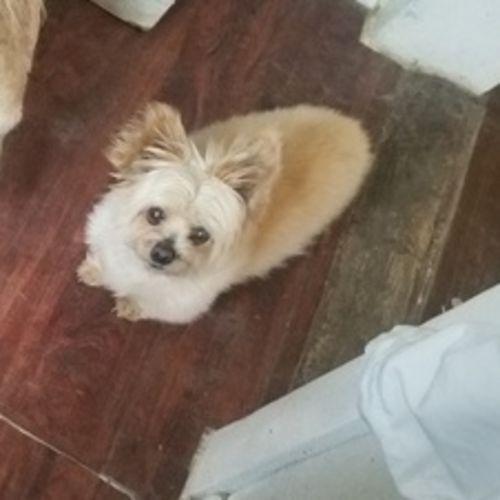 Pet Care Provider Lila E Gallery Image 2