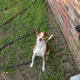 Dog Walker, Pet Sitter in Chalmette