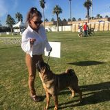 Im a veteran dog trainer . Ill give your dogs the love and care you wInterviewing For Pasadena Pet Groomer, California Jobs