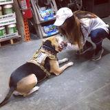For Hire: Hard Working, trustworthy & reliable Petsitter in Warner Robins, Georgia.
