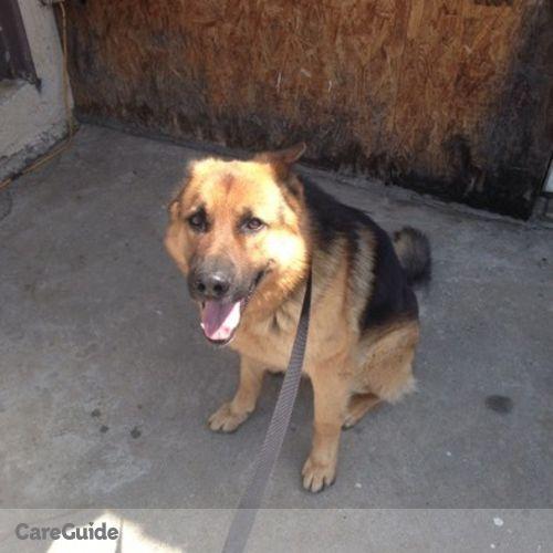 Pet Care Provider Daniel E's Profile Picture