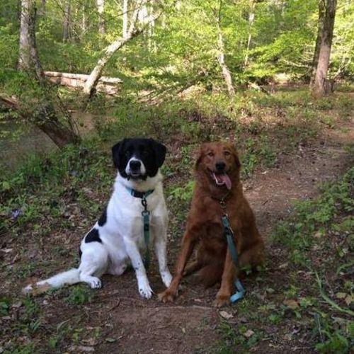 Pet Care Job Megan Tarasi's Profile Picture