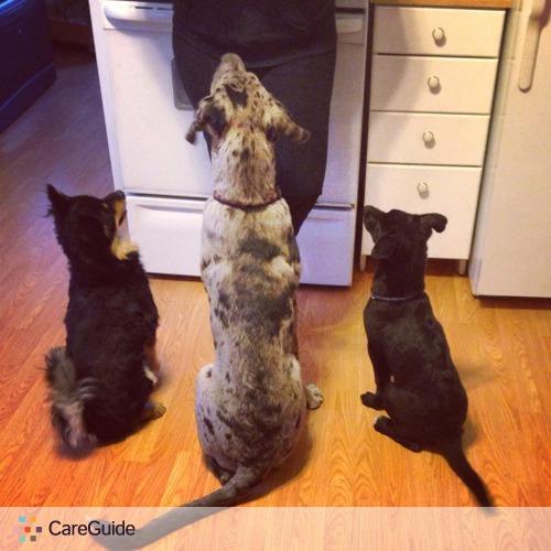 Pet Care Provider Sasha R's Profile Picture