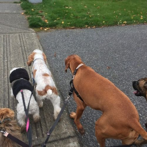 Pet Care Provider Kelsey Queen of Paws Dog Walking Gallery Image 1