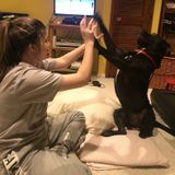 Pet Sitting Offered in Normal