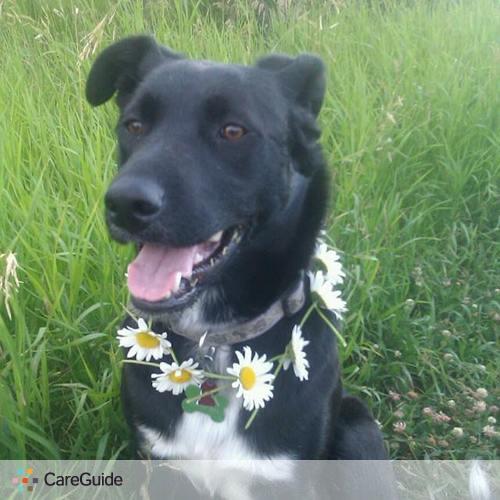 Pet Care Provider Rachel Walpert's Profile Picture