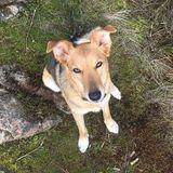 Dog Walker Job in Nanaimo