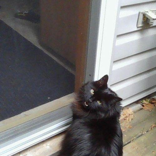 Pet Care Provider Stöck F's Profile Picture