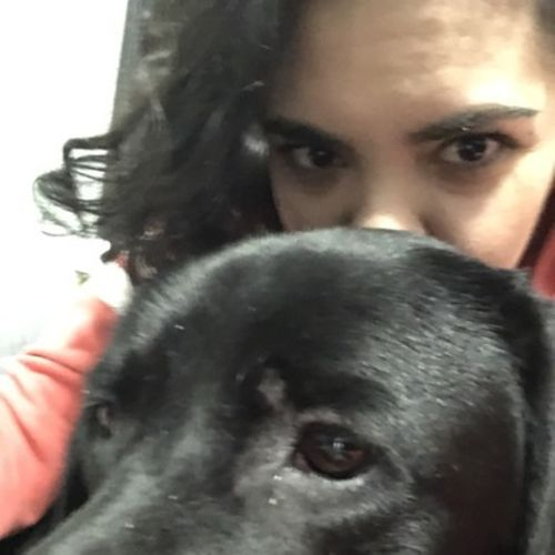 Available: Present Dog Mom Here to Help in Worcester, Massachusetts