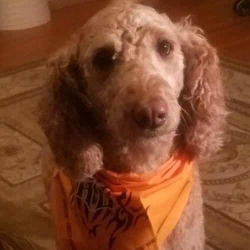 Pet Care Job Renee N's Profile Picture