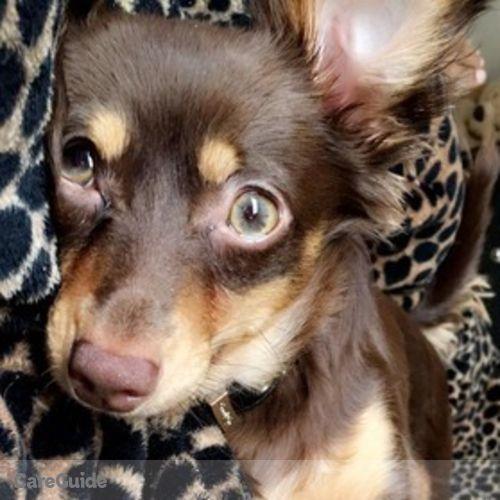 Pet Care Provider Danielle Harris's Profile Picture