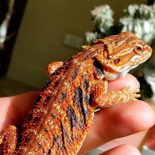 Pet Care Job Dulza McKinney's Profile Picture