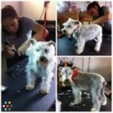 Dog Walker, Pet Sitter in Lovettsville