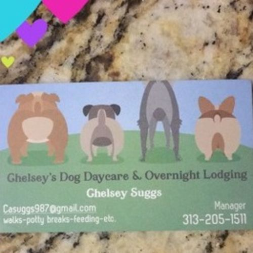 Pet Care Provider Chelsey S Gallery Image 2
