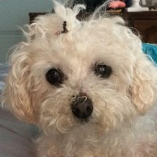 Pet Care Provider Elena Sanchez Gallery Image 2