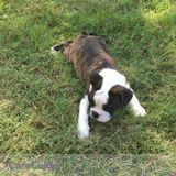 Dog Walker, Pet Sitter in Prosper