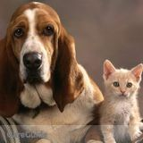 Dog Walker, Pet Sitter in Parkhill