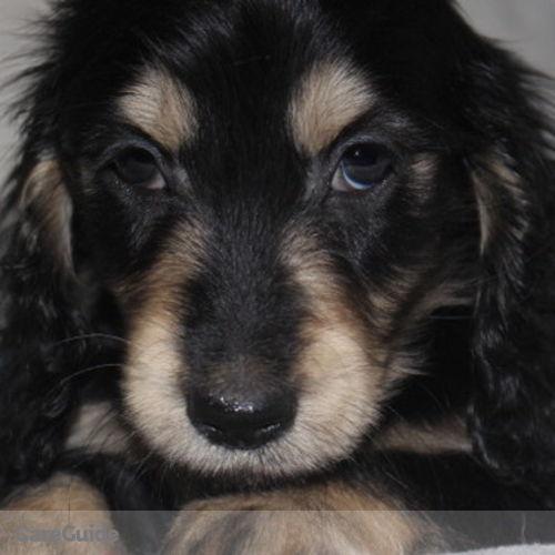 Pet Care Provider Nadia P's Profile Picture