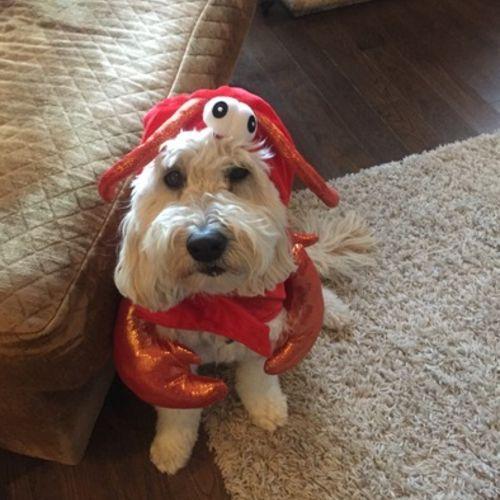 Pet Care Job Suzanne Wattling's Profile Picture