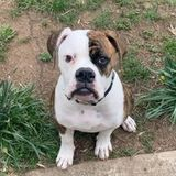Available: Great Pet Carer in Hyattsville offering assistance if needed