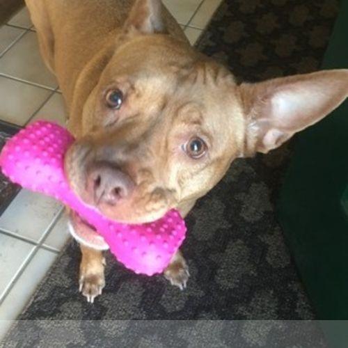 Pet Care Provider Alex Paulsen's Profile Picture