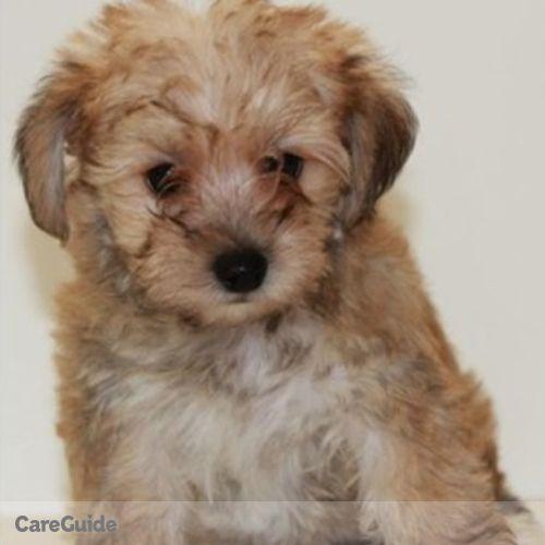 Pet Care Provider Marci Krystek's Profile Picture