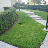 Im Jose supervisor for a landscape company. Im starting my own company to Keep a beautiful garden and keep clients happy