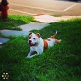 Dog Walker, Pet Sitter in Elizabeth